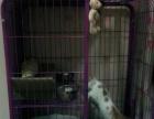 加菲猫价格可商议