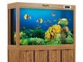 云南鱼缸,昆明鱼缸,云南生态鱼缸,昆明生态鱼缸,云南风水鱼缸