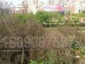 江阳区蓝田二级路成熟商圈商业地皮22亩出售,地理位