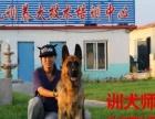 鞍山状元训养犬基地(价格面议)