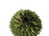 批发水培 花卉无土栽培 室内盆栽 水生盆景植物(小八层)富贵竹