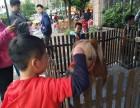 杭州西湖区设特兰矮马转租-小矮马出租-矮脚马租赁-