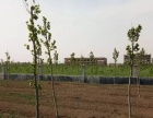 有围墙,25亩,临大路,工业园工业用地,低售