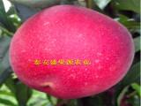 桃树苗-红桃树苗出售