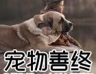 宠物殡葬 狗狗火化 动物火化场 宠物公墓