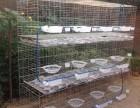 鸽子笼厂家批发 三层十二位鸽子笼 铁丝鸽笼 鸽笼厂家