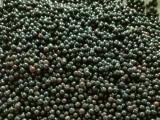 江西檫木种子基地 檫木种子批发价格
