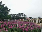 东莞附近环境好的农家乐野炊一日游推荐松湖生态园