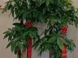 合肥蜀山高新区经开区繁华大道金寨南路开业开张花篮绿植植物租售