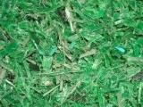 进口特级绿色PET切片、瓶片破碎