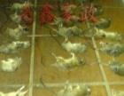 24H随时为您杀虫,专业消杀蟑螂,老鼠,蚊蝇,蚂蚁