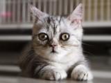 国庆来撸猫啊~