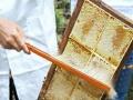 伊犁峰巢蜜美容养颜巢蜜具有高热能、抗菌消炎、养肺润