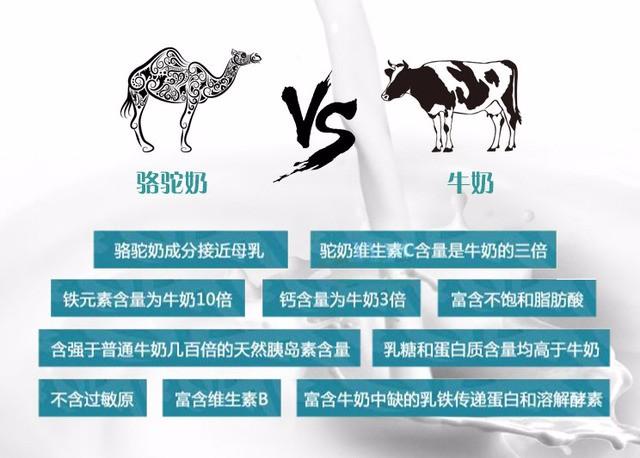 新疆骆驼奶厂家面向全国招代理商