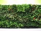 北京植物墙定做仿真绿植墙厂家价格