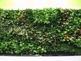 北京植物墻定做仿真綠植墻廠家價格