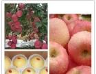 本基地红富士苹果在2011年被省农科厅评为全国苹果