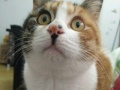 猫咪家庭寄养每天20元