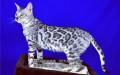 极品小豹猫宝宝品质有保障欢迎上门选购