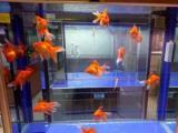 定做魚缸搬魚缸清理魚缸養護魚缸維護魚缸維