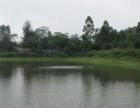 黑龙江七台河市新兴区30亩设施农用地出租
