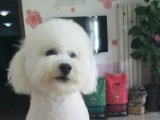 宠物狗狗美容