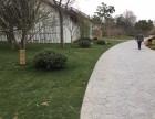 承接室外绿化改造,树木移栽,树木修剪,苗木补种