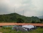 亮甲台 厂房 2000平米