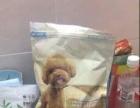 狗粮 小狗通用型3斤