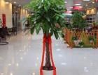 北京天通苑绿植租摆 绿植养护 绿植店