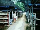 抚顺大型兔业养殖场 肉兔野兔市场价格签回收包技术