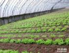 【冬季出游】滨州南外环5公里 草莓蔬果 采摘游玩