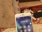 出售三网通iPhone6s Plus 16g
