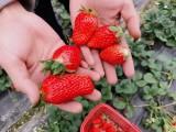 上海近郊农家乐 烧烤钓鱼 采草莓摘桔子吃土菜