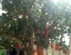 芦荟,吊兰,燕子掌等十几种