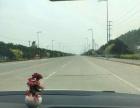 饶阳县马屯泽润丝网产业园 厂房 2080平米