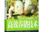 高效现代科学养猪技术大全教程 安微哪里能买到正品实用吗