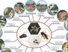 专业灭老鼠、灭蟑螂、灭蚊蝇等害虫