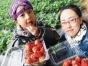 【亲子采摘】长泰十里蓝山万亩花海金黄油菜花采摘草莓