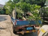大量废旧树枝树身,有需要请联系