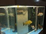 出售自用龙鱼缸