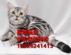 中山哪里有卖布偶猫多少钱一只布偶猫好养吗已做疫苗保证健康
