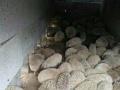 刺猬种苗 刺猬养殖 海狸鼠 龟加盟 种植养殖