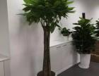 滨海新区花卉租赁中心 绿植养护