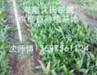海南定安县屯昌县澄迈县本地槟榔苗大量现货出售 欢迎来园考察