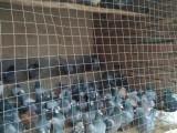 鸽子批发出售