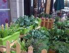 吃自己家里种的健康蔬菜 家庭菜园,花园,屋顶绿化