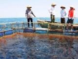 海洋资产评估 海洋资源资产评估