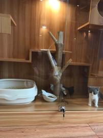 海珠赤岗猫咪专业寄养,优惠多多