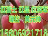 山东苹果批发价格,..11f